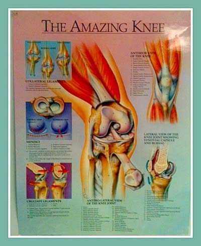 knee_bone_joint_pain